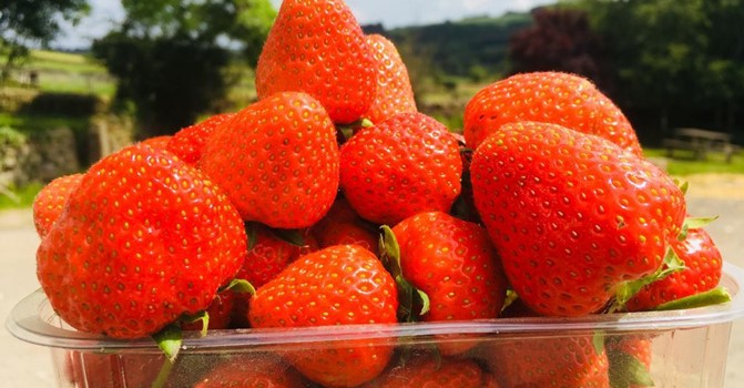 Birchfield Strawberries